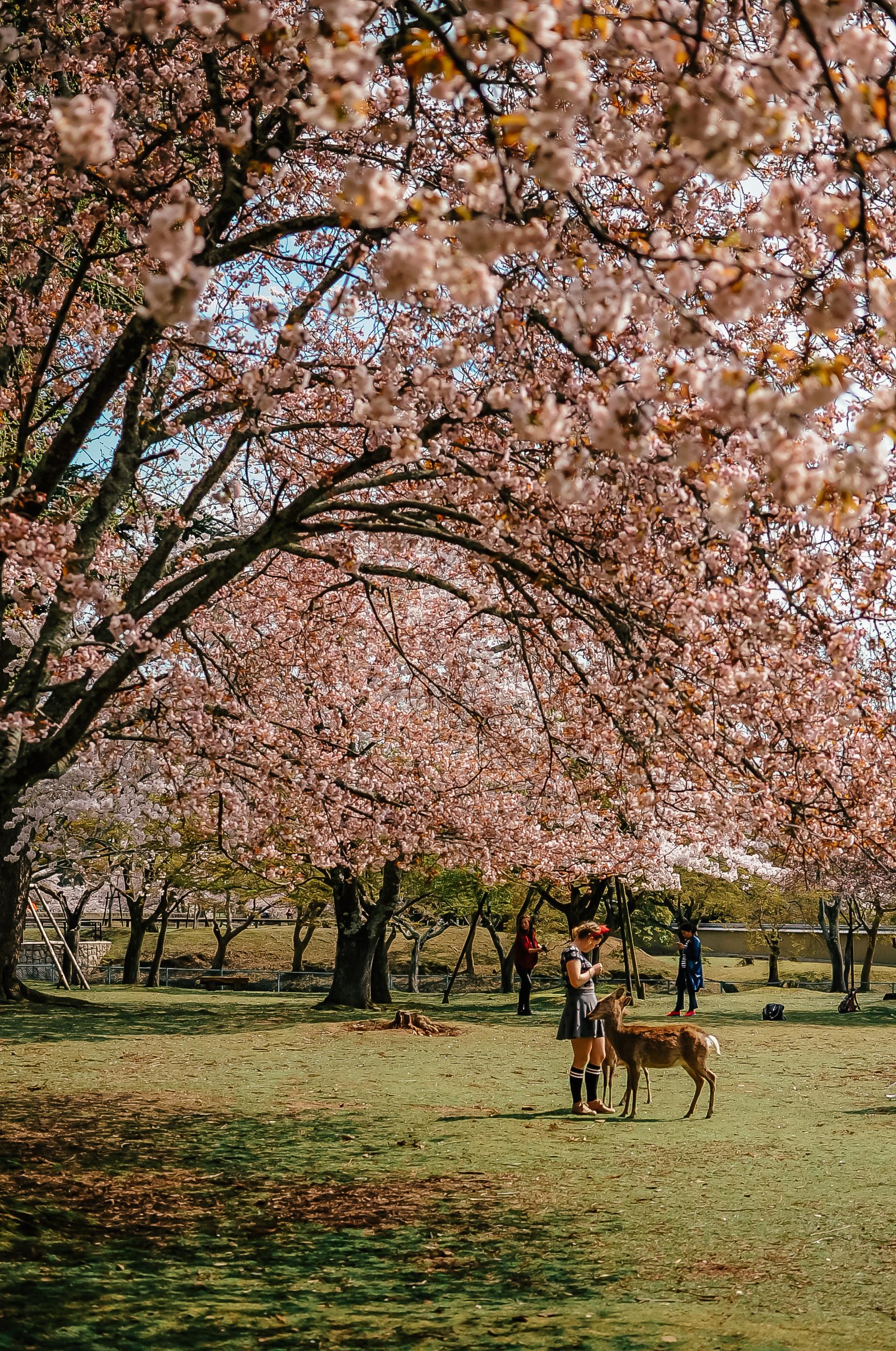 Nara Japonia 1