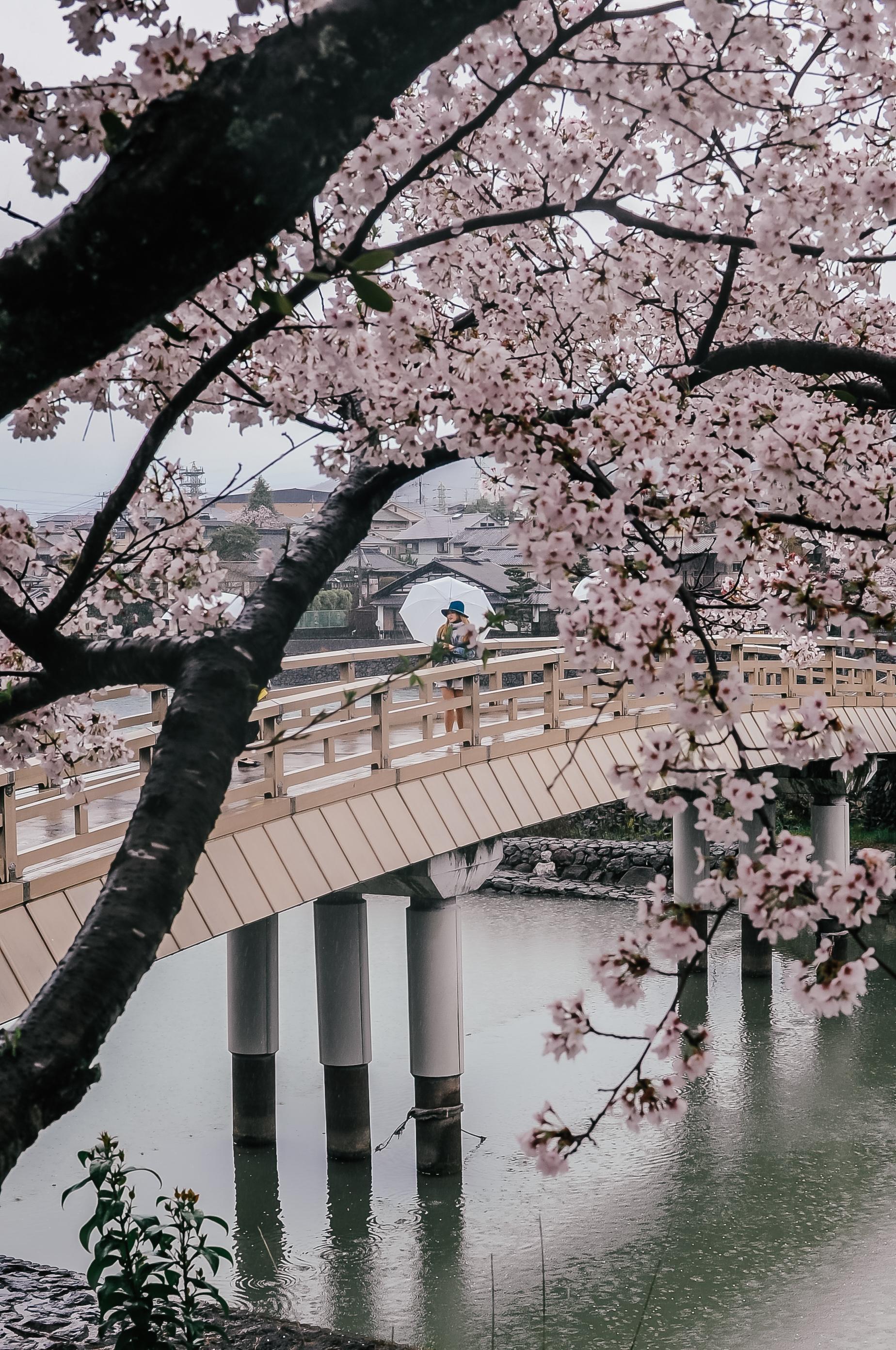 Uji, Japonia